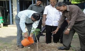Planting Tress - Gampaha Office - 2013
